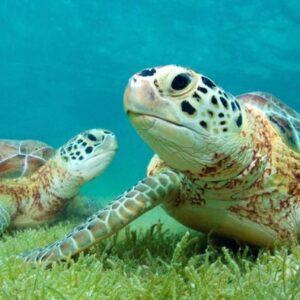 Tulum and Akumal Snorkeling