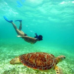 Tulum and Turtle Adventure