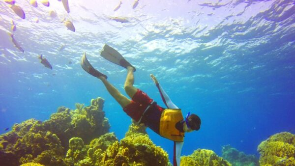 Cozumel Snorkel Tour from Cancun