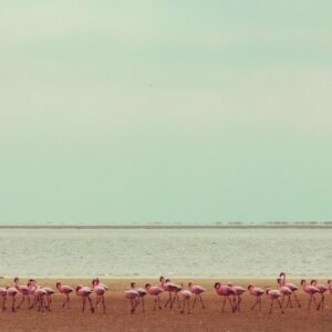Las Coloradas Tour