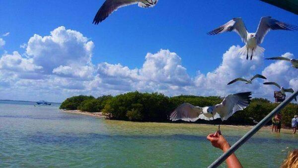 Holbox Island Tour
